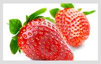 World Fruits Centre Importer Marketer Of High Quality